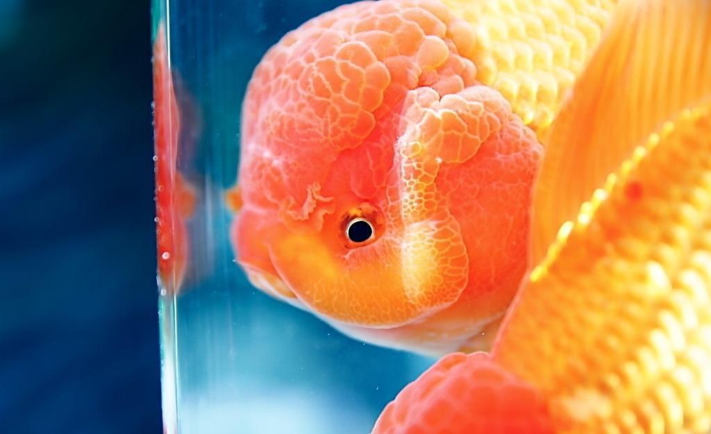 观赏鱼之家